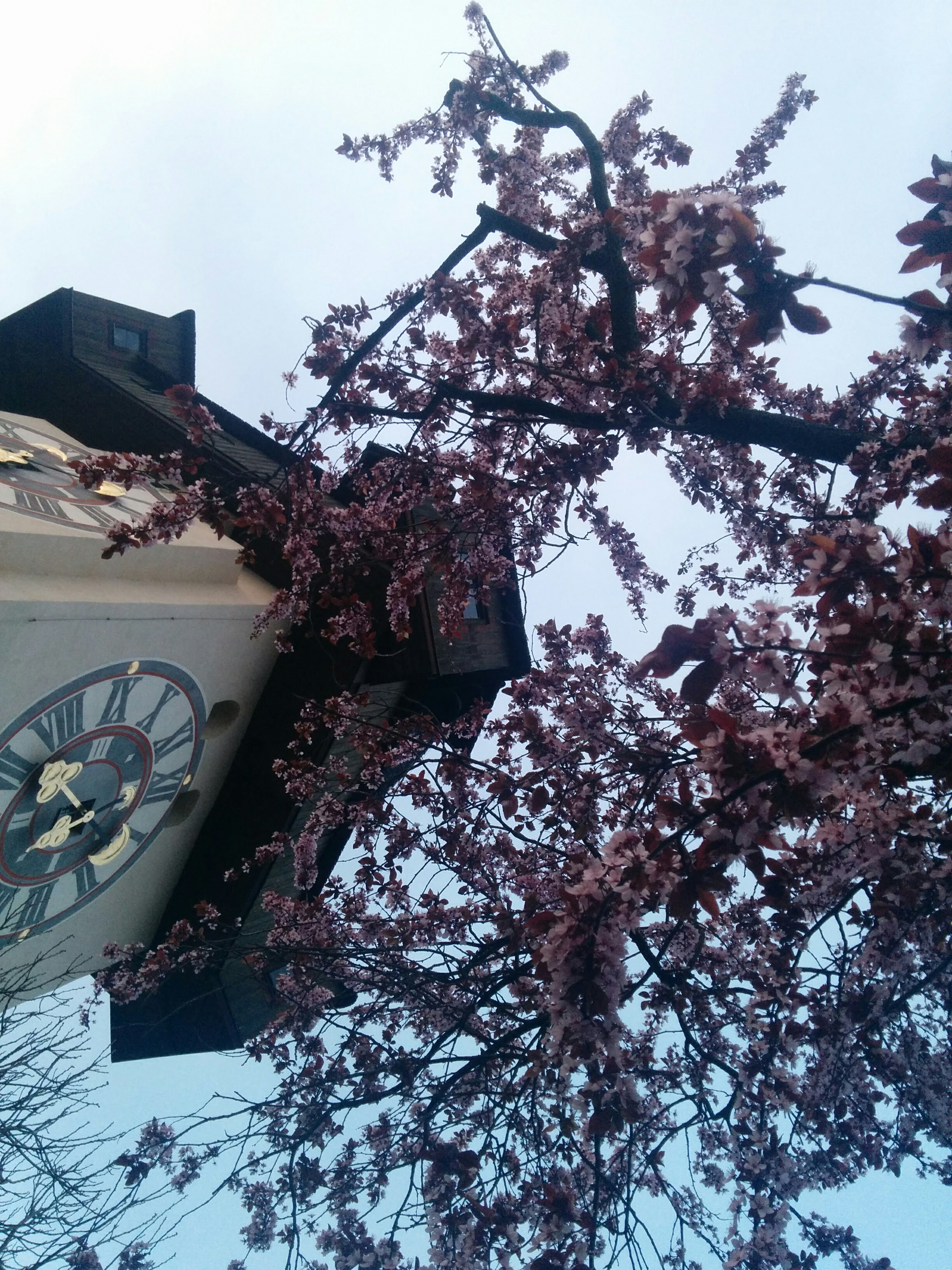 the Uhrturm with flower blossoms