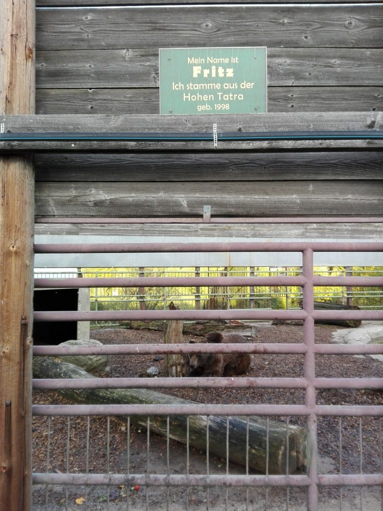 Fritz, the bear, behind his cage