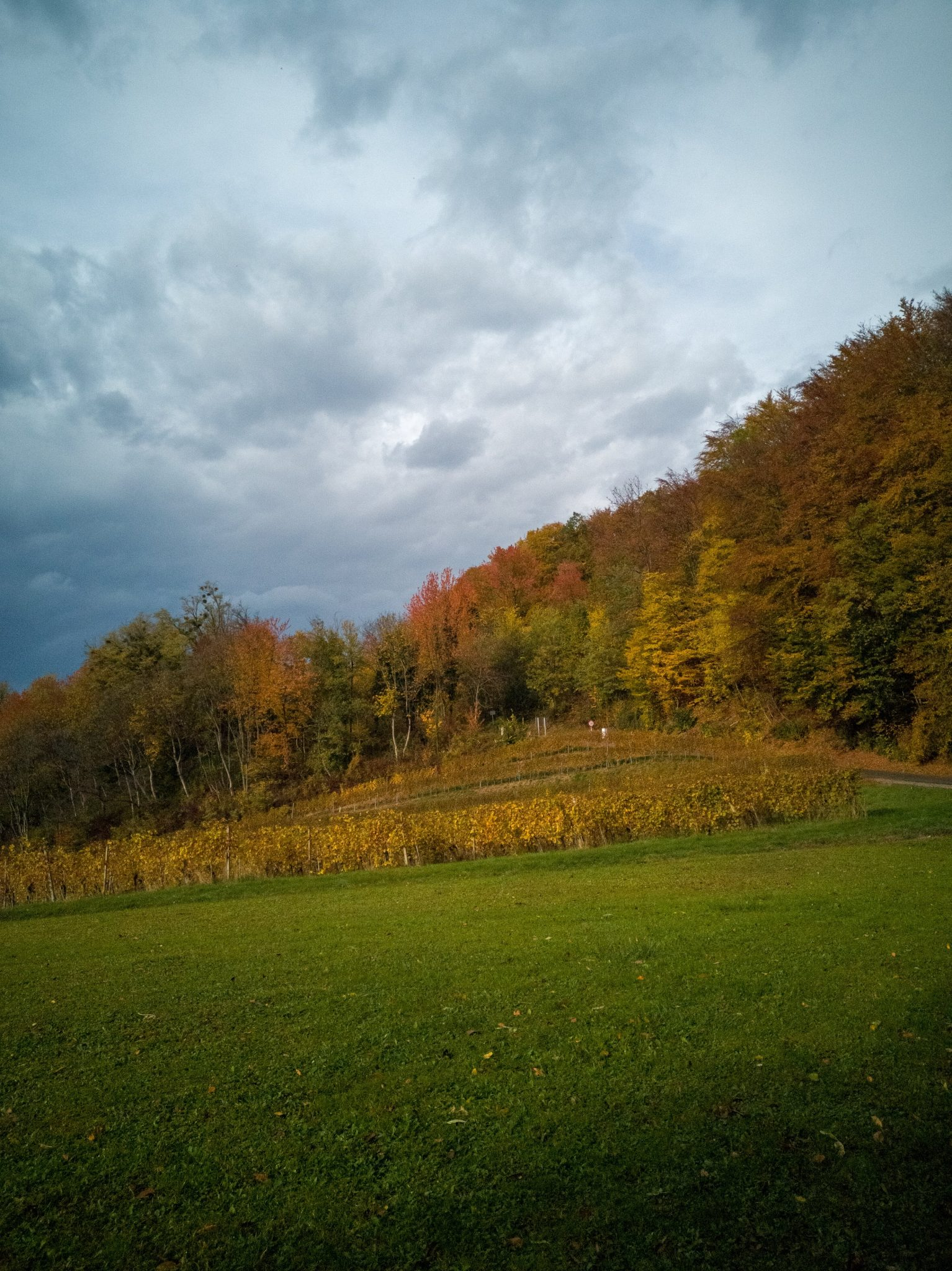 the styrian wine region in autumn