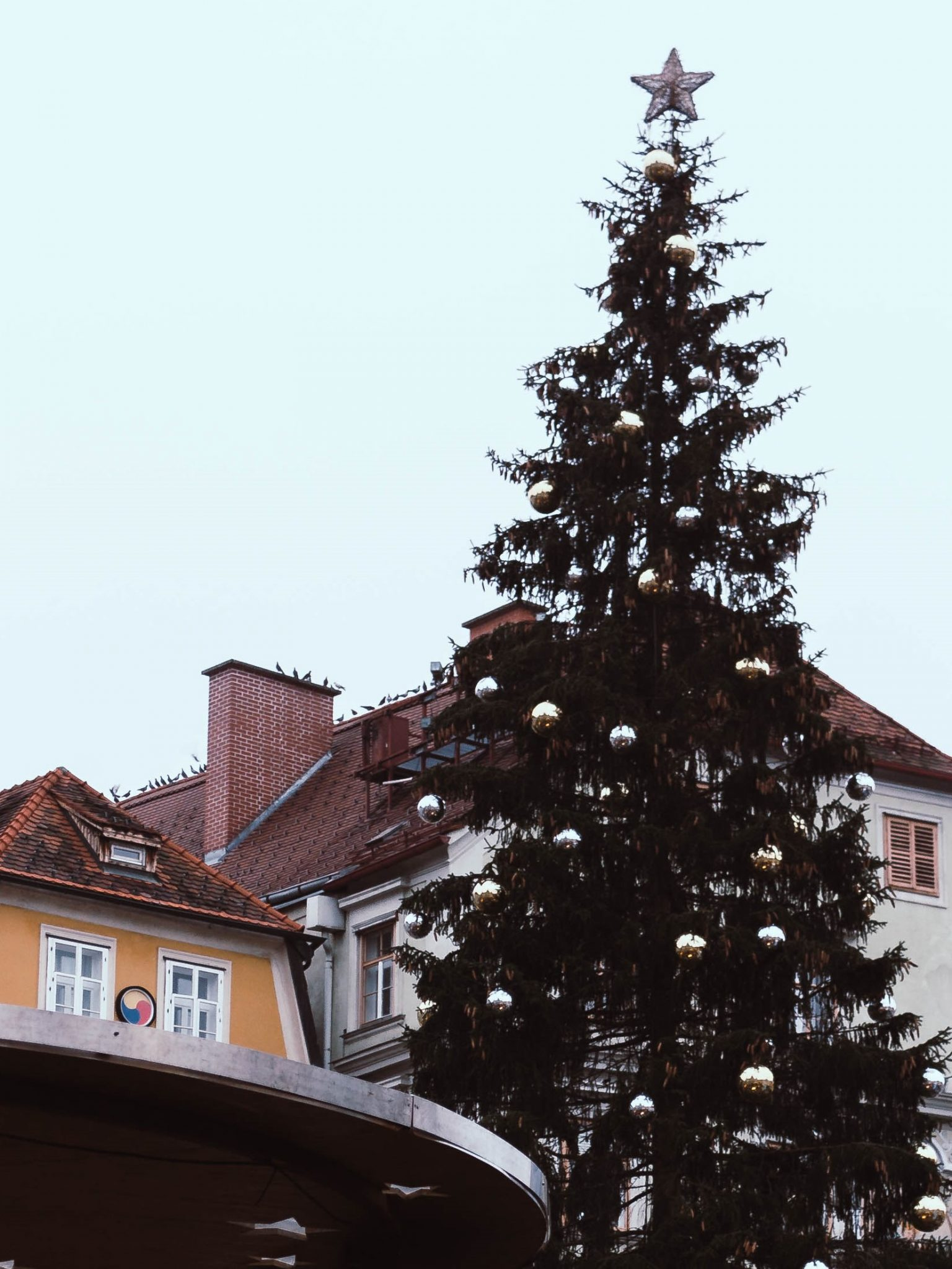 the Christmas tree in Graz main square