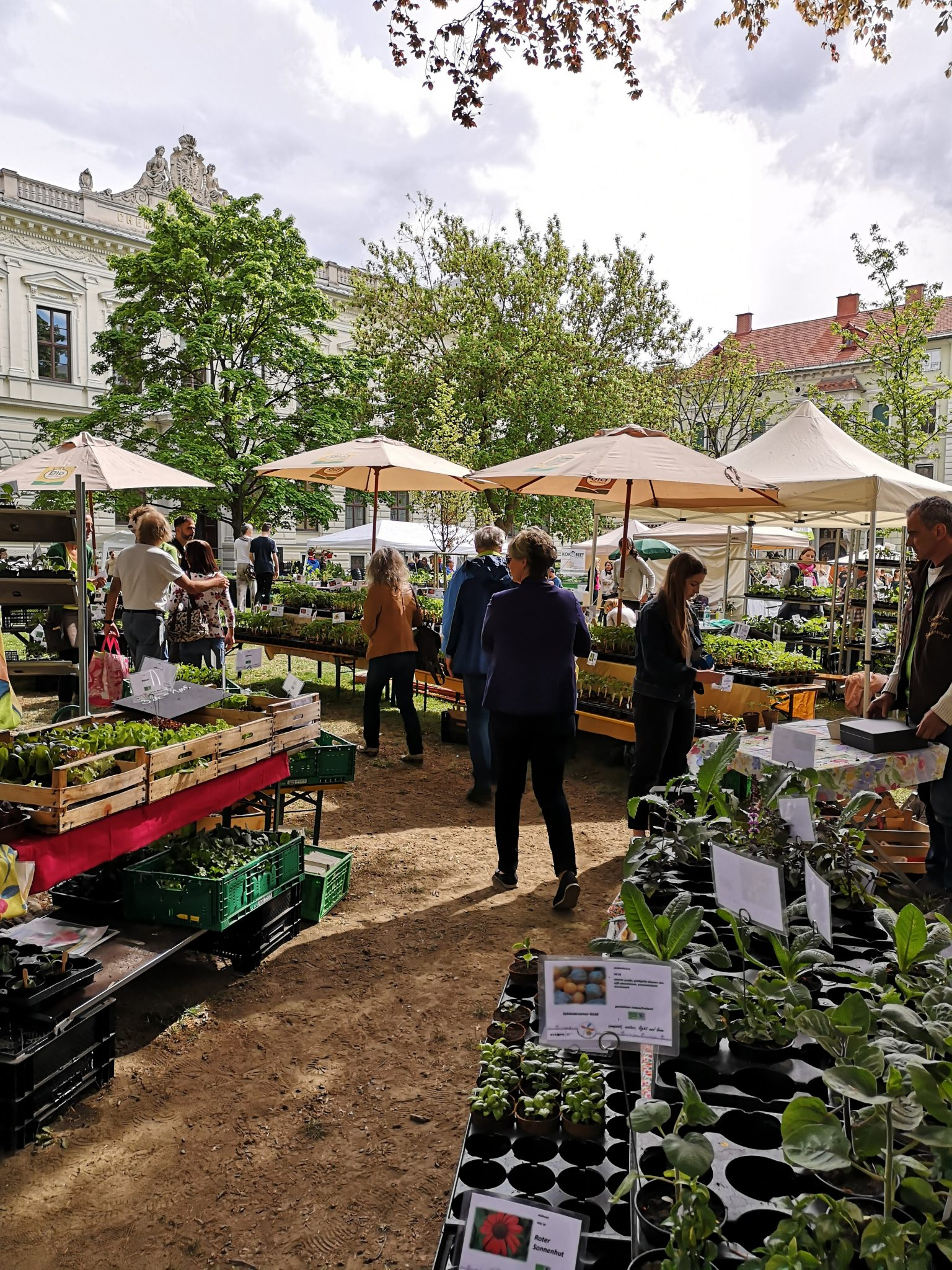 the rare plants market at the main university in Graz